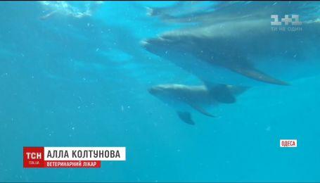 В Одессе дельфиненок родился прямо на глазах зрителей