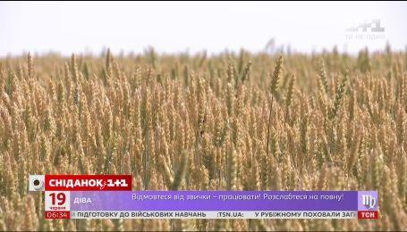 Будет ли дорожать хлеб из-за засухи