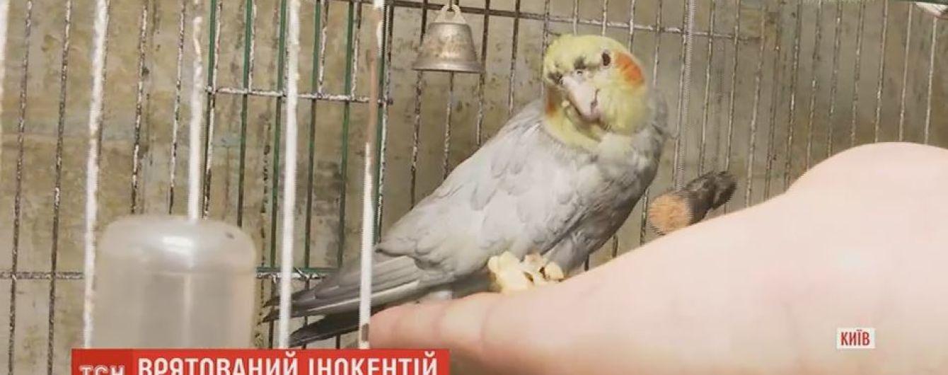 Папуга Інокентій прославив свого рятівника, який впіймав і виніс його з вогню