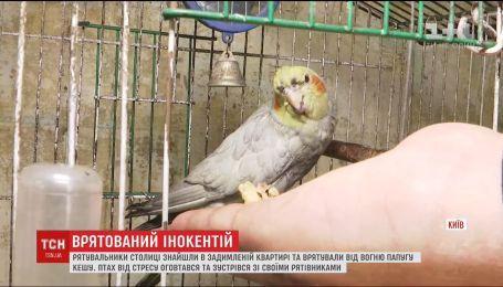Спасение Иннокентия: в Киеве пожарные вытащили попугая из задымленной квартиры