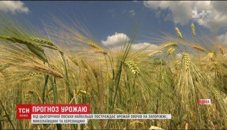 Эксперты рассказали о последствиях засухи для украинского урожая
