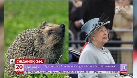 Британскую королевскую семью сравнили с животными