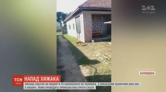 На Харківщині лисиця атакувала чоловіка на його ж подвір'ї