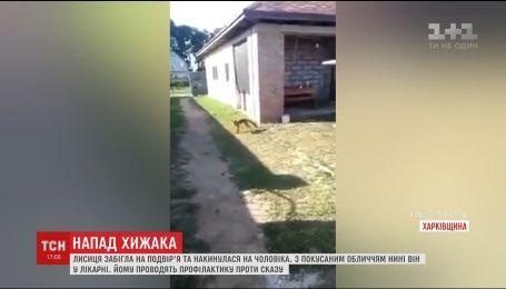 На Харківщині шпиталізували чоловіка після нападу лисиці
