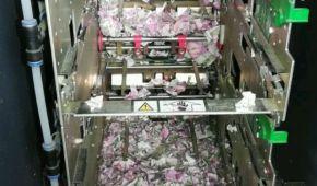 Миші з'їли: в Індії голодні гризуни пошматували понад мільйон рупій у банкоматі