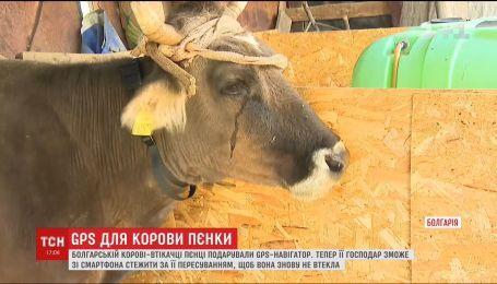 Корове Пенке подарили навигатор на солнечных батареях