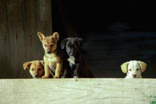 Південнокорейський суд вперше визнав вбивство собак заради їжі незаконним