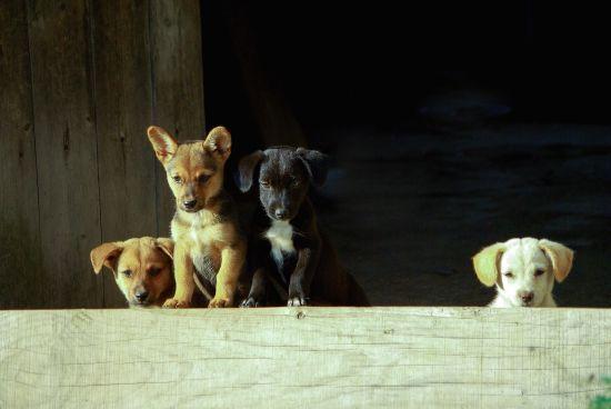 На Волині невідомий жорстко травмує безпритульних собак