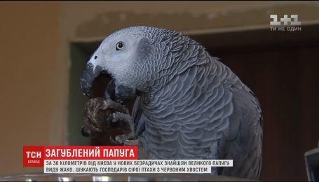 Поблизу Києва знайшли великого папугу виду Жако