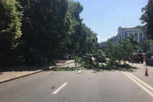 В центре Киева на автомобили упало огромное дерево, перекрыв движение по улице