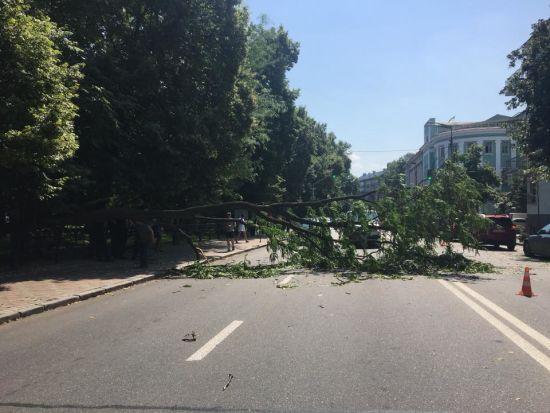 У центрі Києва на автомобілі впало величезне дерево, перекривши рух вулицею
