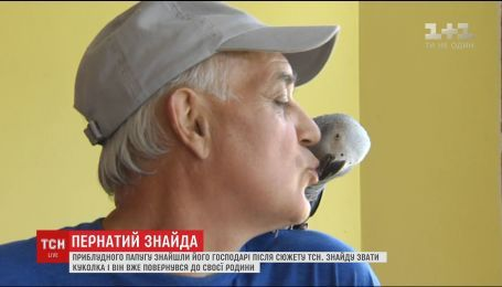 Попугай, к поискам хозяев которого присоединилась ТСН, вернулся домой