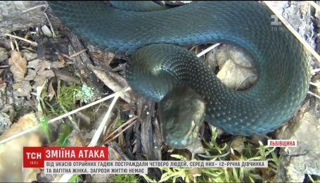 Змії атакують. Чотирьох людей після укусів отруйних гадюк шпиталізували на Львівщині