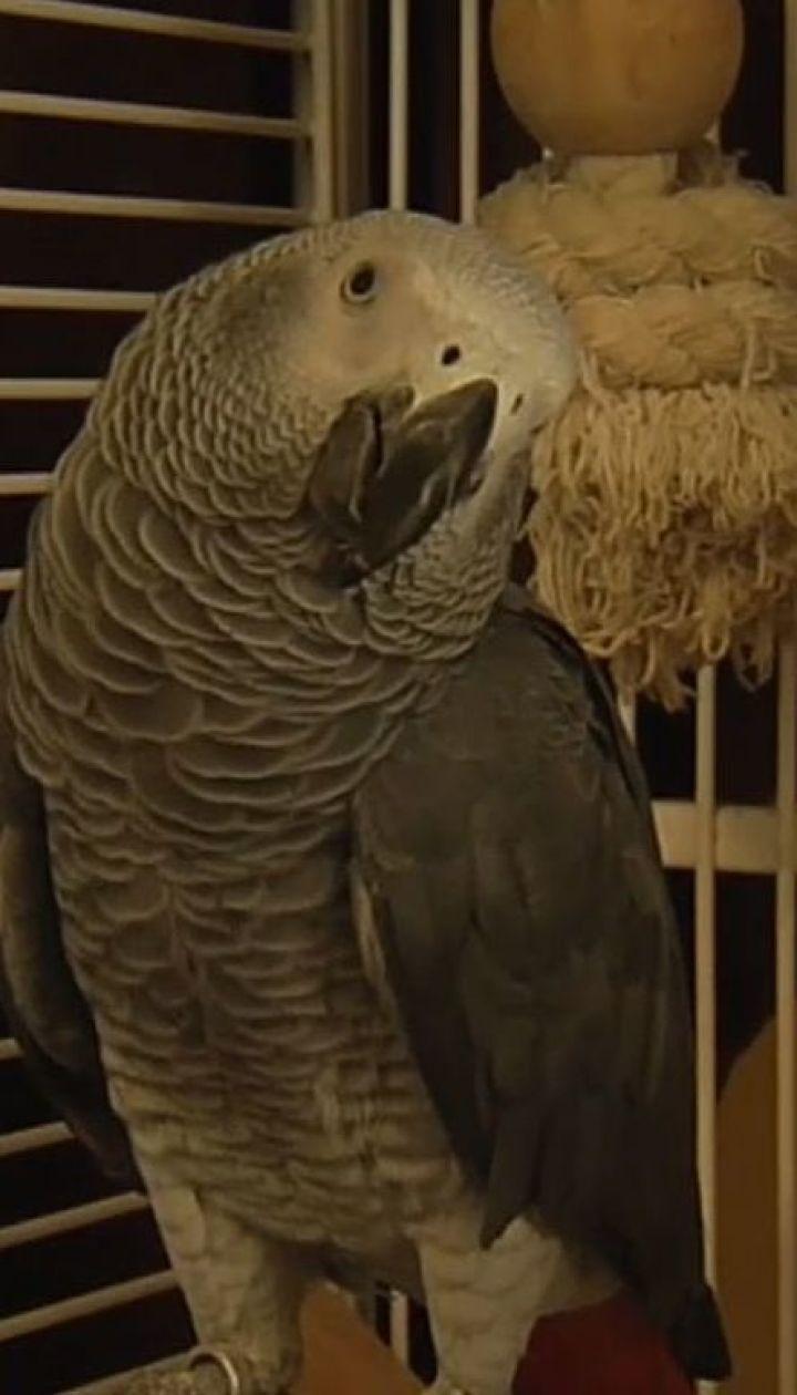 Повернення блудного папуги. Сюжет ТСН допоміг господарям розшукати загубленого птаха