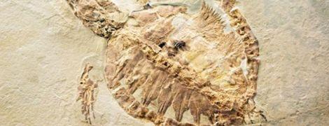 В Китае фермер нашел окаменевшую черепаху юрского периода