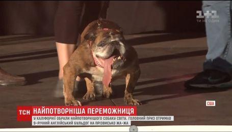 У США обрали найпотворнішого собаку світу