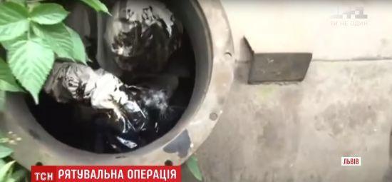У Львові рятувальники витягли із діжки з мазутом маленьке кошеня