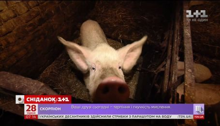 Безкоштовне лікування у приватних клініках та рекордний імпорт свинини - економічні новини
