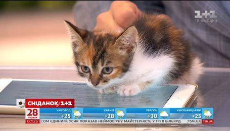 Двомісячні кошенята шукають турботливих господарів