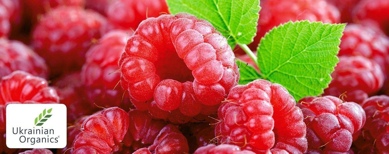 """Компания """"Украинская Органика"""" начинает выращивать органическую малину"""
