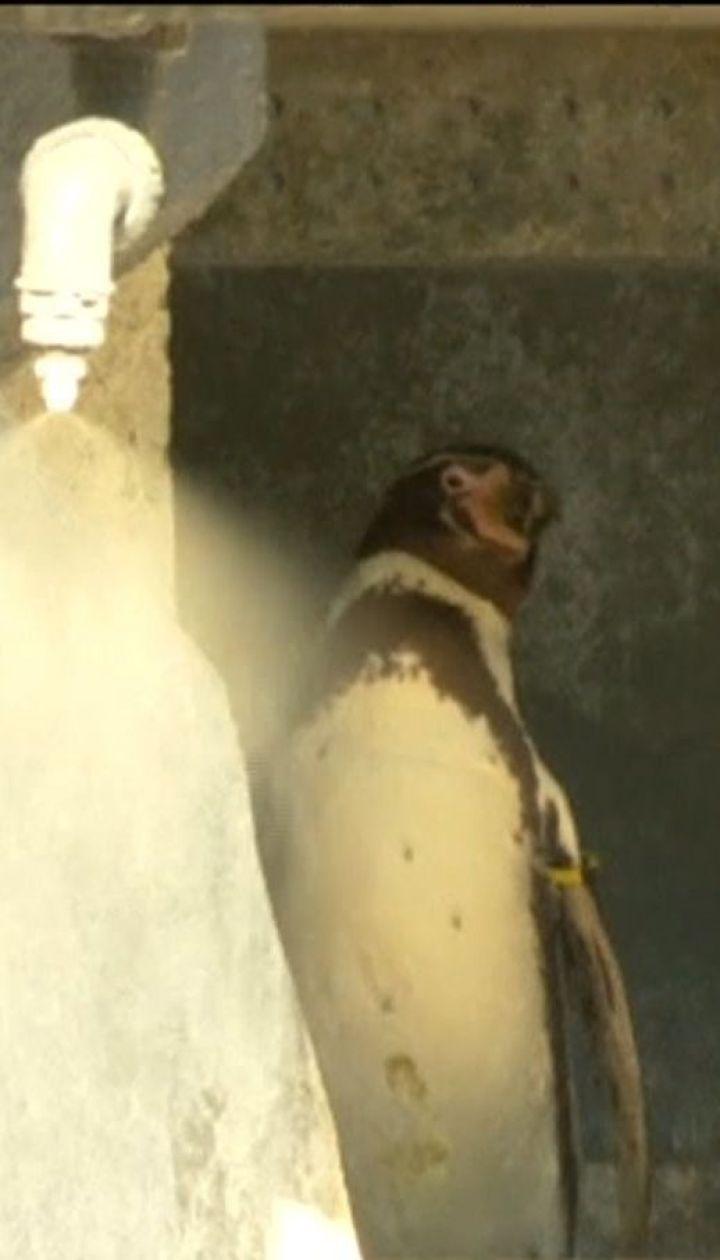 У паризькому зоопарку тварин частують замороженими продуктами, аби врятувати від спеки