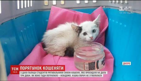 В Днепре спасатели провели необычную операцию, чтобы снять с крыши котенок