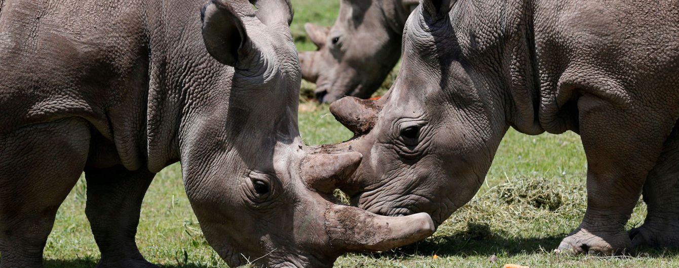 Вчені створили ембріон північного білого носорога для порятунку майже зниклого виду