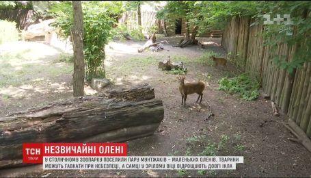 Гавкає, але не собака. Найдавніші олені поселилися у зоопарку Києва