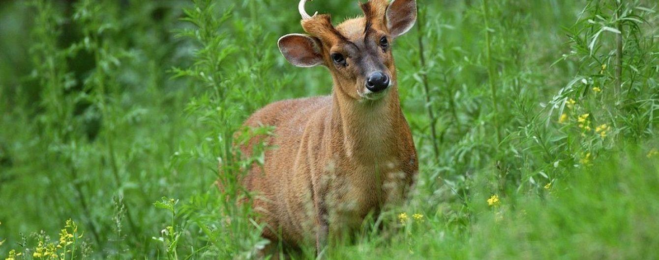 В киевском зоопарке появились олени, которые лают