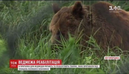 Зоозащитники спасли от издевательств трех медведей