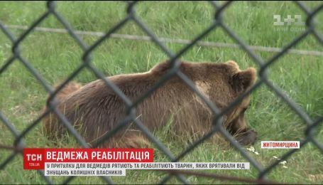 В приюте для медведей реабилитируют животных, которых спасли от издевательств бывших владельцев