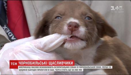 Первые щенки с Чернобыля нашли новые дома в США