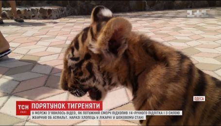 В биопарке Одессы тигренка заставляли фотографироваться с посетителями под палящем солнцем