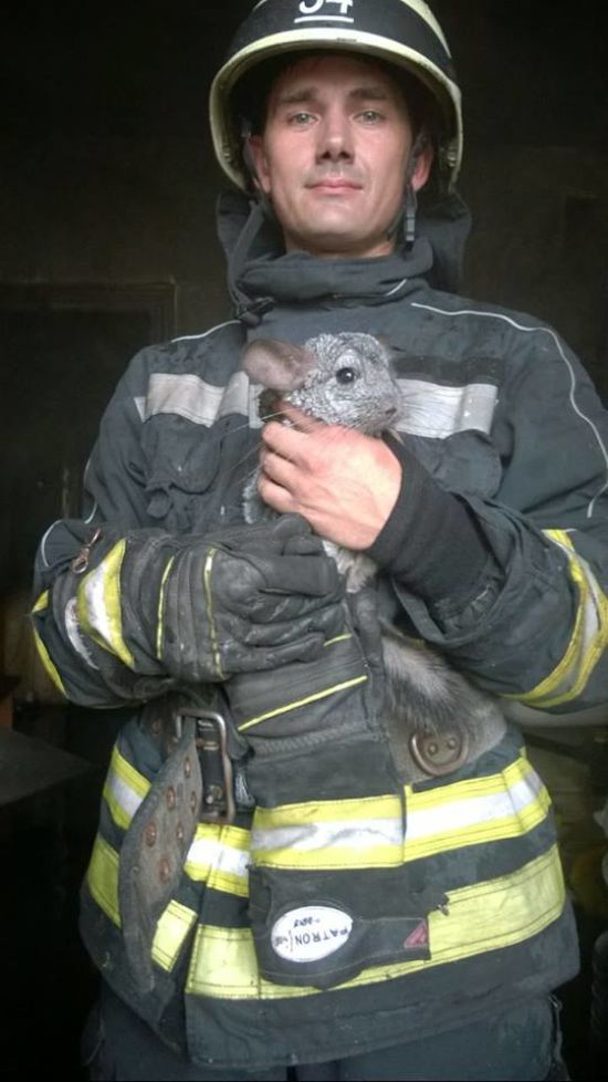 На Київщині пожежники врятували шиншил із охопленої вогнем квартири