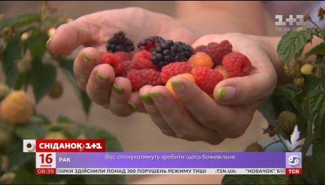 Как проходил ягодный фестиваль в Костовце