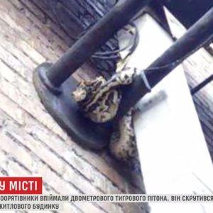 У середмісті Києва на опорі ліхтаря помітили величезного пітона