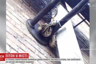 В центре Киева на опоре фонаря заметили огромного питона