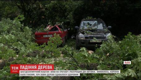 Во Львове дерево разбило два автомобиля