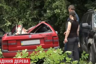 У Львові завалився велетенський каштан і розчавив два автомобілі