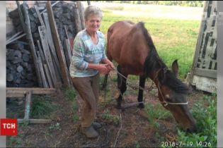 На Дніпропетровщині врятували кобилу, що провалилася у закинутий погріб