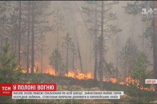 Від полярного кола до Балтійського моря. Масові лісові пожежі спалахнули у Швеції