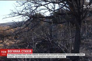 Згарище замість оливкових садів. На Криті пожежі знищили 500 га плантацій