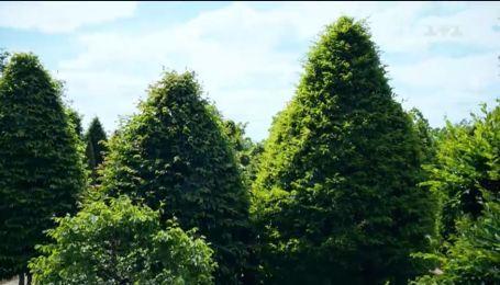 Як підстригти дерева в саду і на балконі – Зелена ділянка