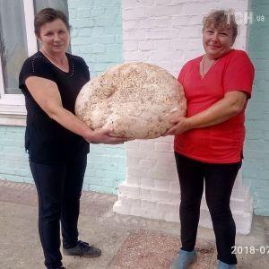 На Киевщине нашли гриб-гигант весом почти 18 кг