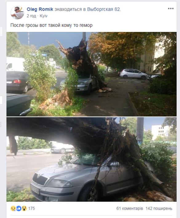 повалені дерева, злива