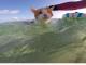 Одне око кіт втратив, але це не заважає йому бути щасливим пухнастиком