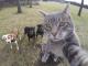 Цей пухнастий фанат селфі любить пофотографувати наодинці або в оточенні зграї собак