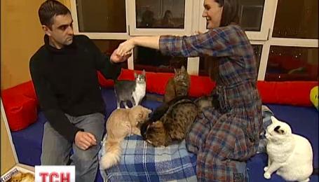 Щоб боротися зі стресом, кияни б'ють посуд та відпочивають у котячому антикафе