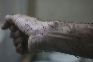 Активізація комарів. Кого найбільше тероризують надокучливі комахи і як від них уберегтися