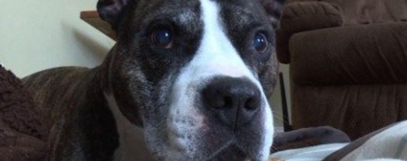 У США пес ціною власного життя врятував господарів від озброєного грабіжника